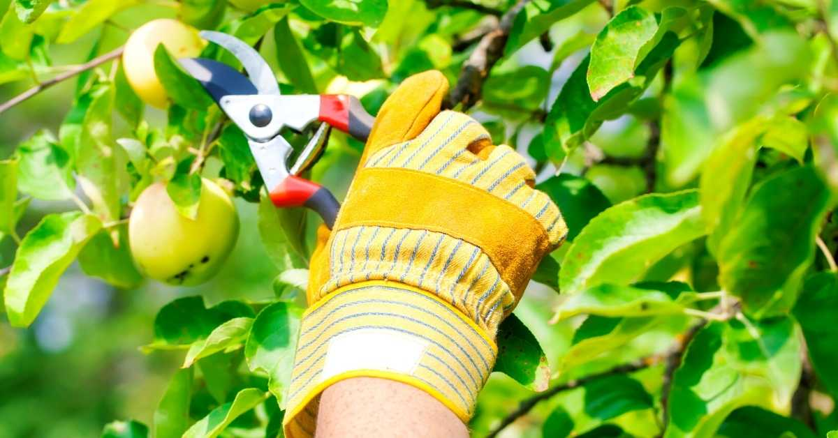 5 Best Garden Pruning Shears for your Gardening Projects