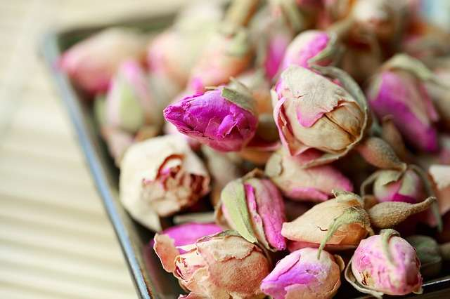 drying up rosebuds