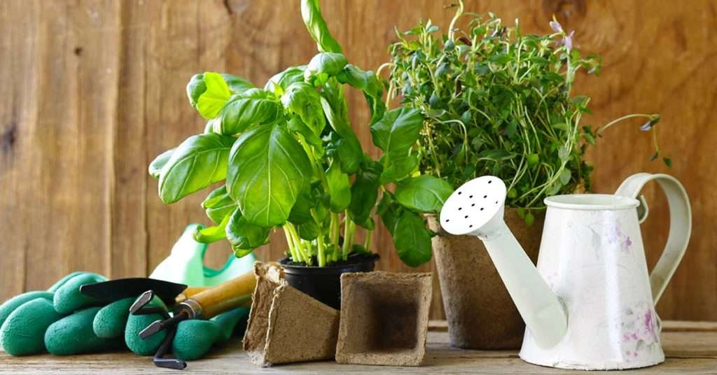 types of herbs and their usage