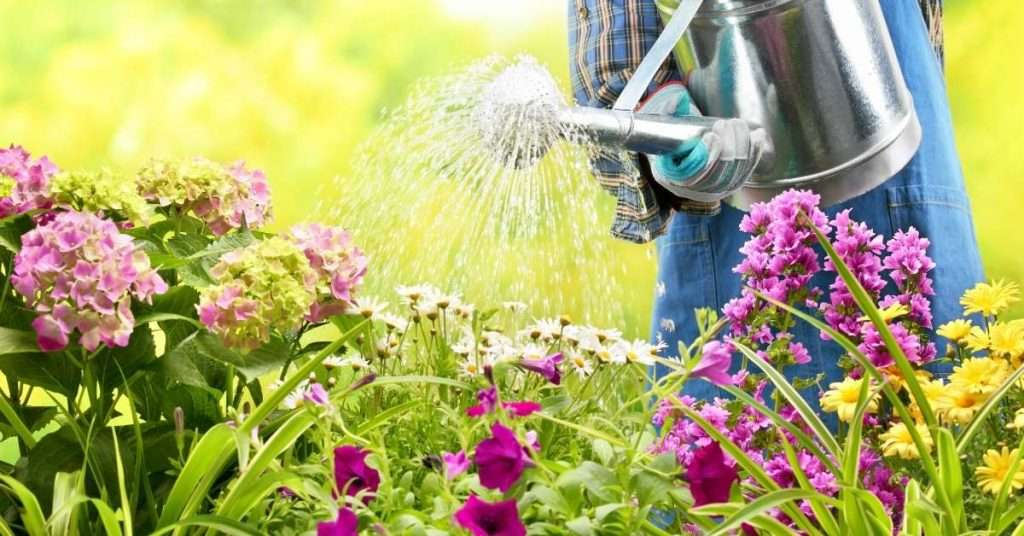 Best Watering Cans For Gardening